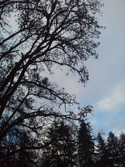 Nature Tree Branch No People Beauty In Nature Sky Cold Temperature Winter Time