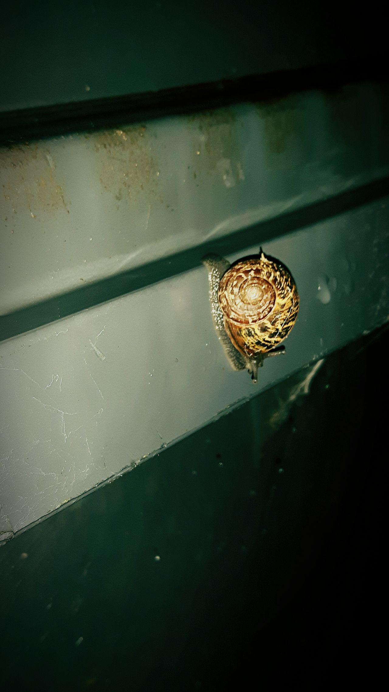 Bin Snail. Where's He Bin. Where's He Wheelie Bin. Bin Snail's Are Fun. Bin Snails Laugh A Lot. Snails🐌 Snail Photography Snails In Action. Speeding Snail's Get Snail Speeding Tickets. . 😍😙😙😙😍😍😙😻😻😻