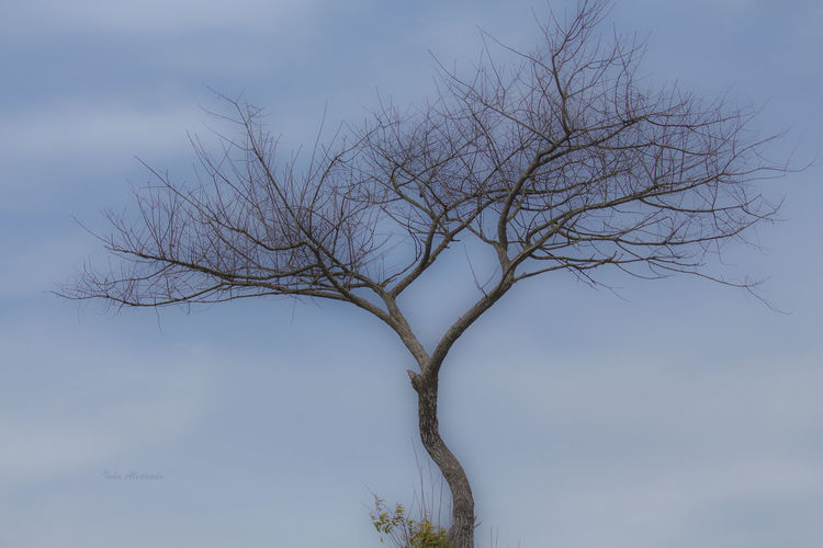 Bare Tree Beauty In Nature Blue Branch Day Guatemala High Section Low Angle View Nature No People Non-urban Scene Outdoors Quetzalteca Quetzaltenango Remote Scenics Single Tree Sky Solitude Tranquil Scene Tranquility Tree Trunk