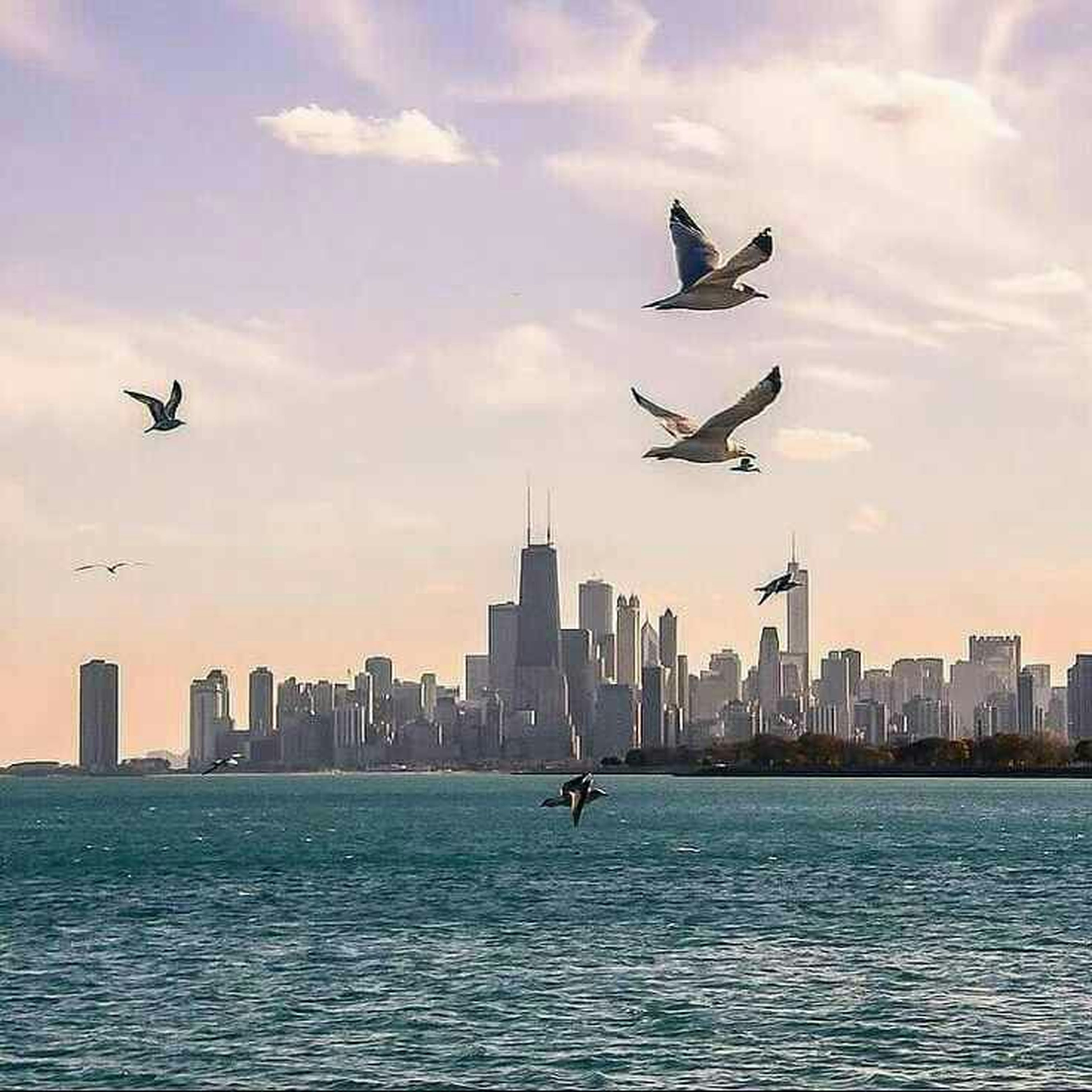 flying, building exterior, waterfront, bird, city, transportation, architecture, mid-air, built structure, sky, water, sea, cityscape, mode of transport, spread wings, travel, nautical vessel, animal themes, cloud - sky, animals in the wild