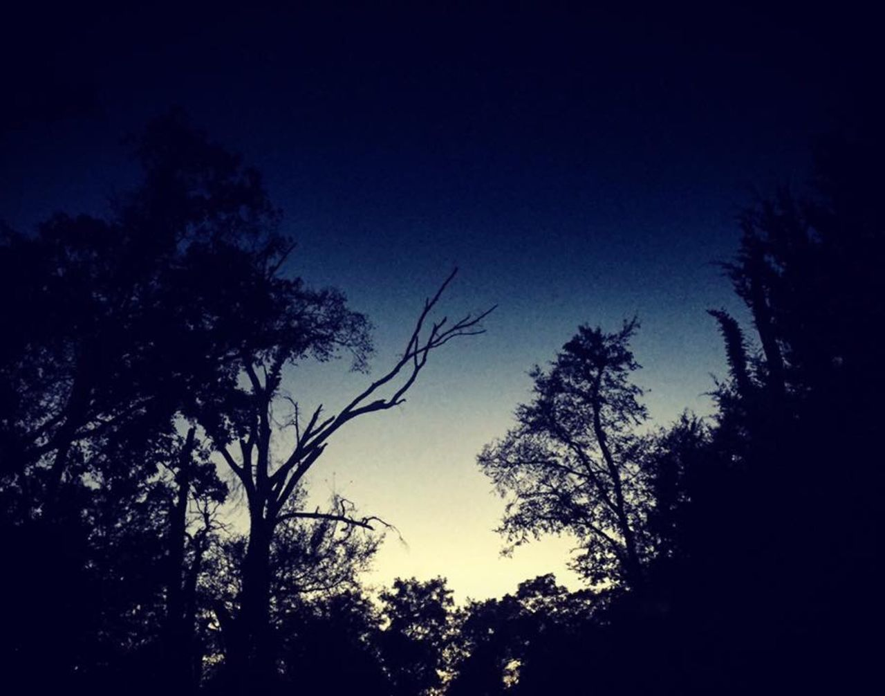 tree, low angle view, silhouette, dark, nature, night, no people, growth, blue, beauty in nature, outdoors, sky, moon, clear sky