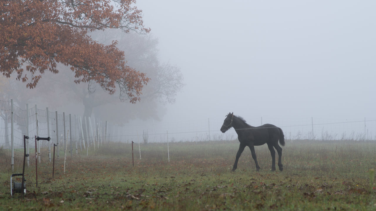 foggy morning / Animal Autumn Autumn Colors Colors Day Domestic Animals EyeEm Best Shots Fall Foal Fog Horse Horses Landscape Leaf Leaves Life Nature No People One Animal Outdoors Pasture Relaxing Rust Tree Weather
