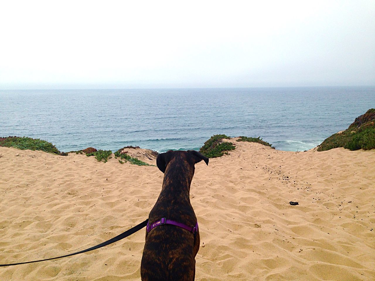 Rear View Of Brindle Boxer On Shore Against Clear Sky