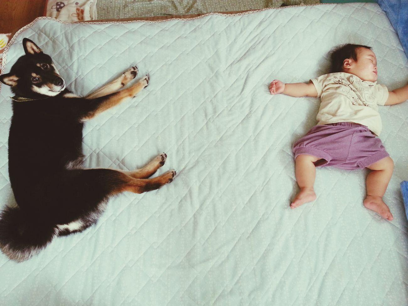 zzz... Sizuoka My Dog My Baby Sleep