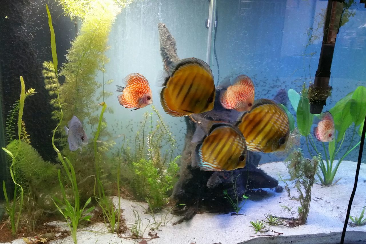 Close-Up Side View Of Fish In Fish Tank