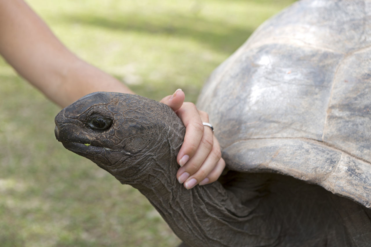 Animal Curieuse Island Giant Tortoise Hand Reptile Seychelles Tortoise Touch