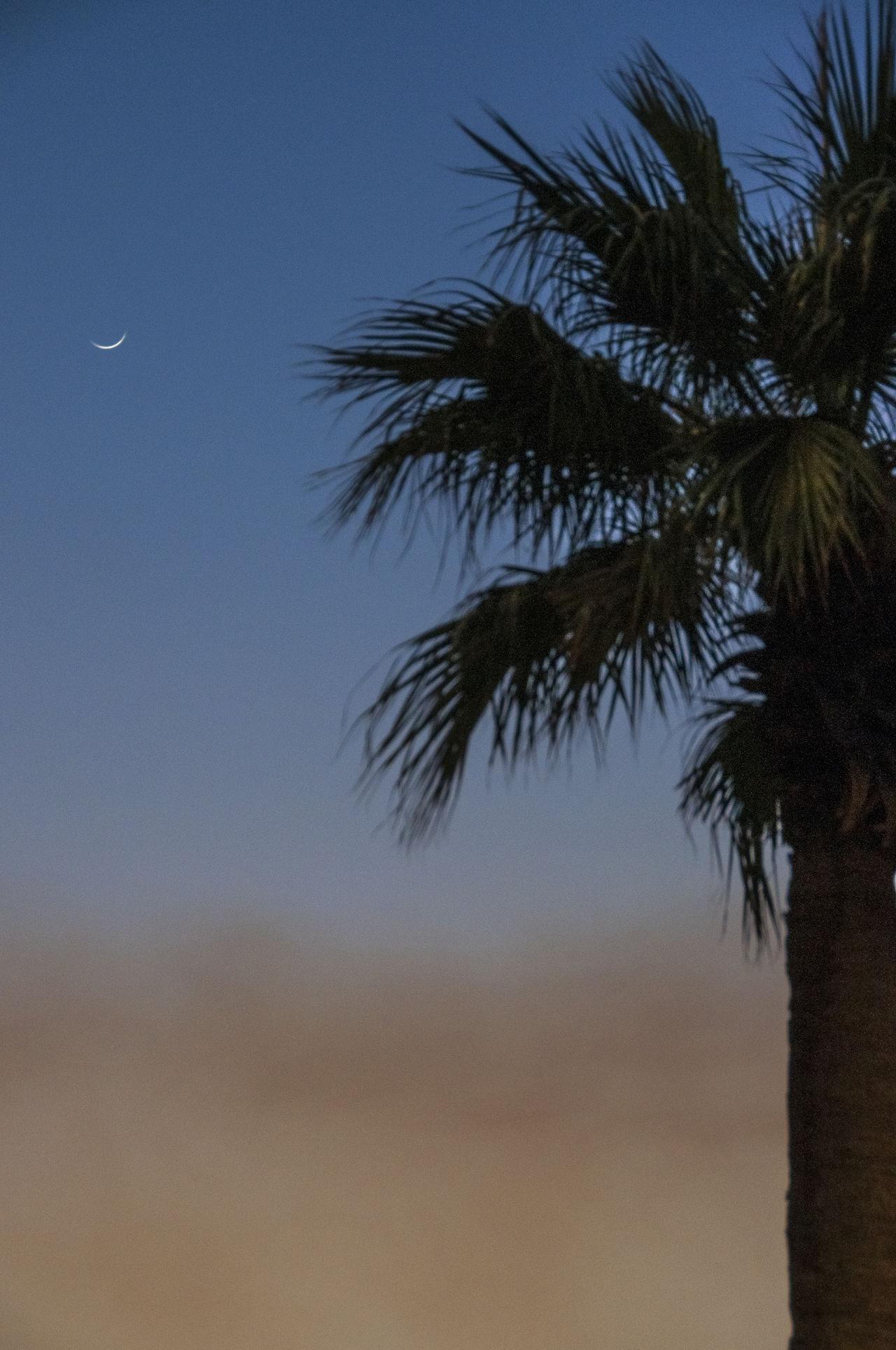 Beauty In Nature Dusk Dusk Sky Kuwait Palm Tree Palm Tree Sandstorm Scenics Sunset Sunset Collection Tranquil Scene