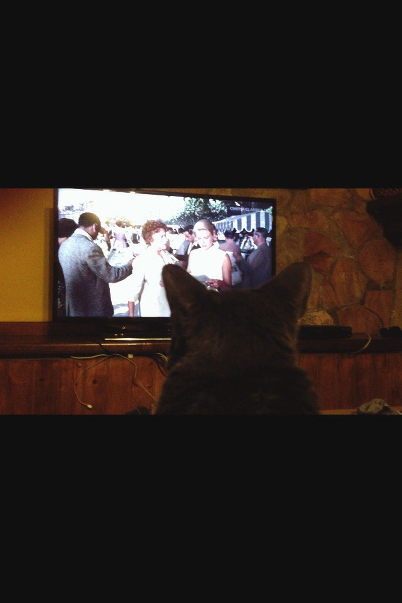 Zoe and Hitchcock. Hitchcock Cat Lovers Shelovesit