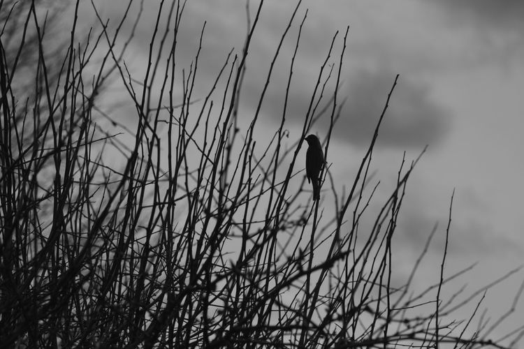 Cloudy Grayscale Nature Winter Animal Bird Black And White Blackandwhite Gray Greyscale Monochrome Outdoors Sky Wildlife
