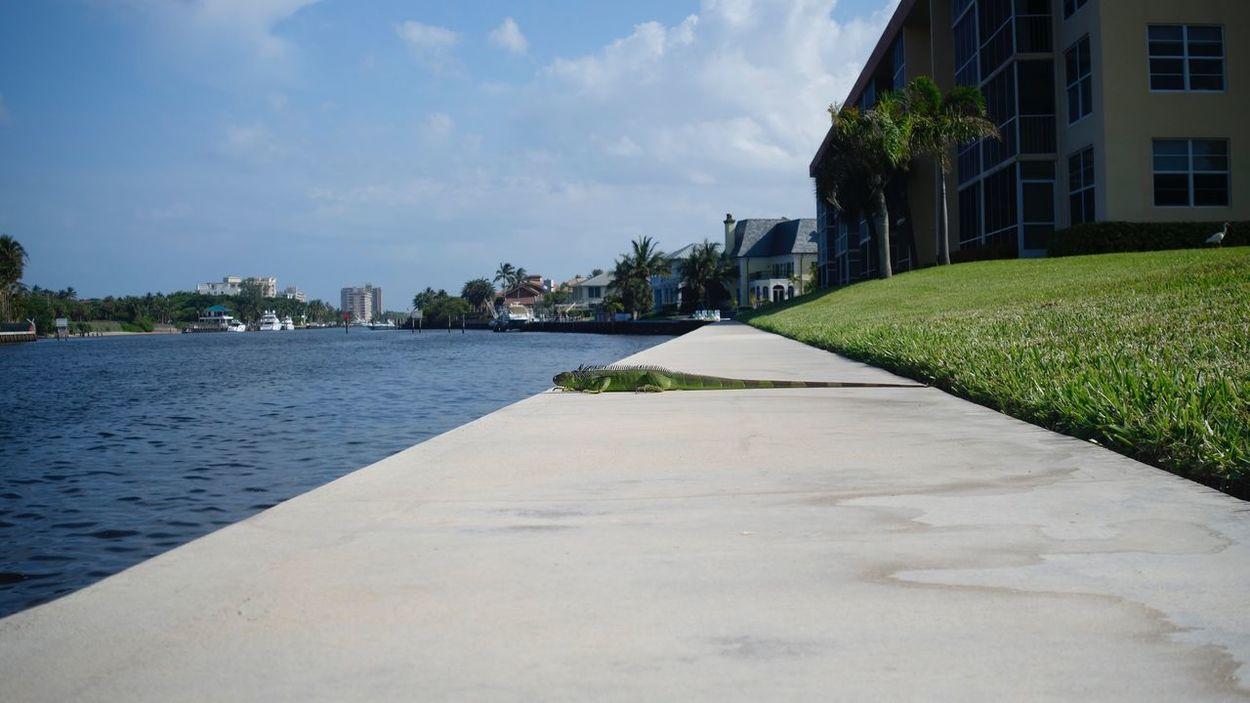BYOPaper! Iguana Sea Residential Building Grass Reptile Walkway