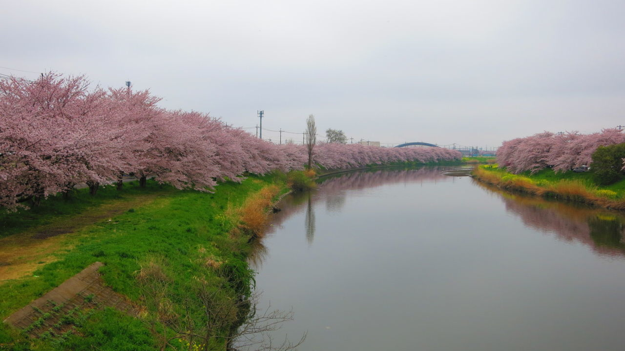 Nature Outdoors Japan Cherry Blossom Flower No People Water