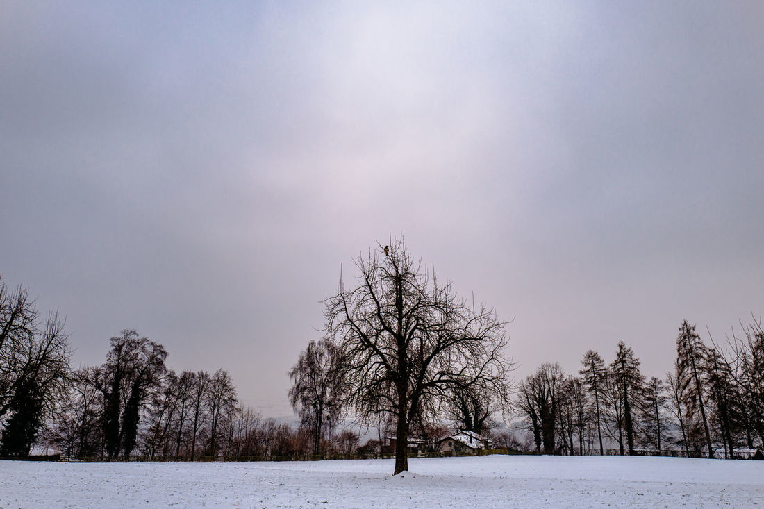 Bare Tree Beauty In Nature Cold Temperature Day Landscape Nature No People Outdoors Schenkon Sky Snow Snowing Switzerland Tree Winter