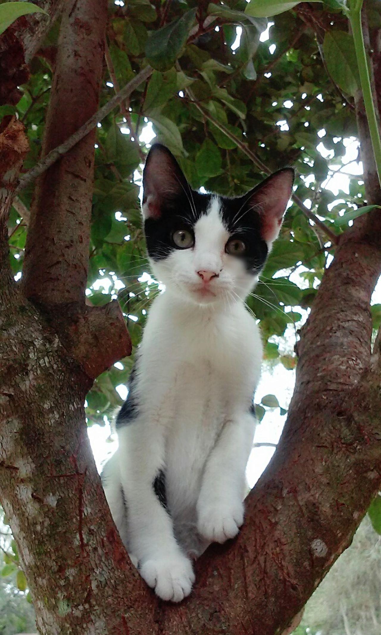 I Love My Cat Cat Lovers Cat♡ Cats Of EyeEm Cat Eyes Cats 🐱 Catportrait Catlady Catsoneyeem I Love Cats Cats N Trees Love Cats