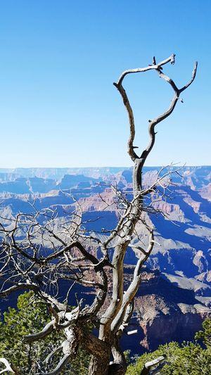 South RimGrand Canyon Travel Photography Nature Photography Arizona Desert Extreme Terrain The KIOMI Collection EyeEm Best Shots