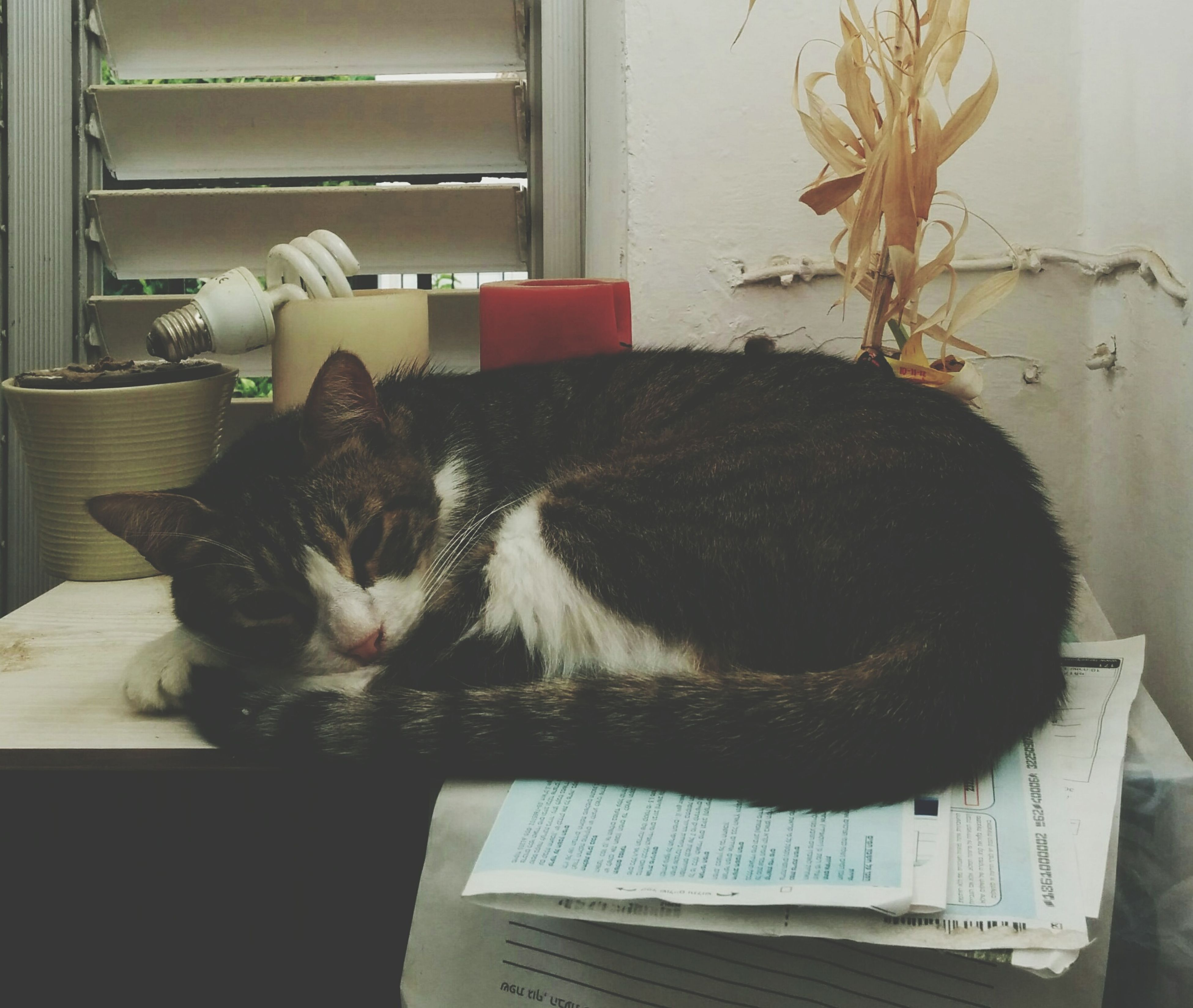domestic animals, pets, animal themes, one animal, mammal, indoors, domestic cat, cat, relaxation, feline, home interior, resting, lying down, window, sleeping, home, house, sofa, at home, chair