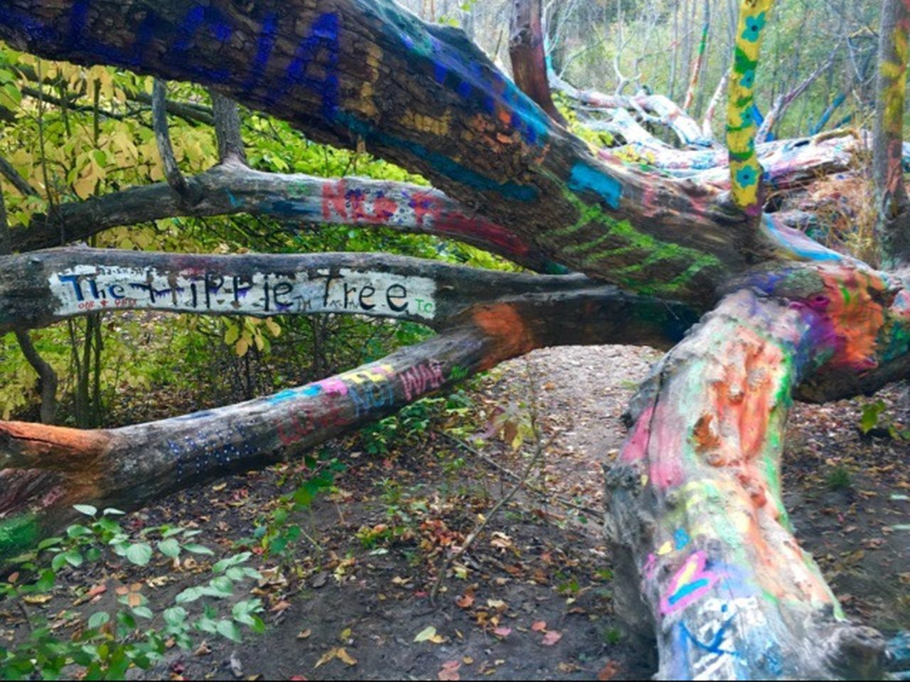 Graffiti Found This In The Woods Hippie Tree Michigan Hikingadventures