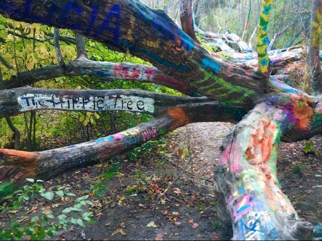 Graffiti Found This In The Woods Hippie Tree Michigan Hikingadventures