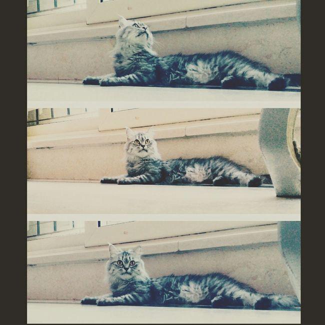 Cat♡ Cats Of EyeEm Spontaniouscaptures