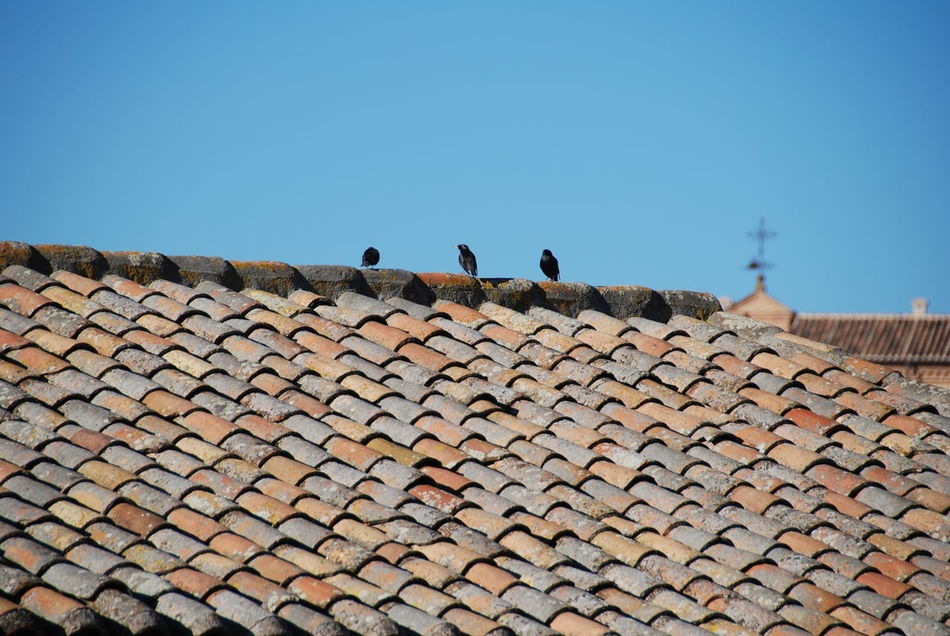 Beautiful stock photos of roof, Animal Themes, Animals In The Wild, Architecture, Building Exterior