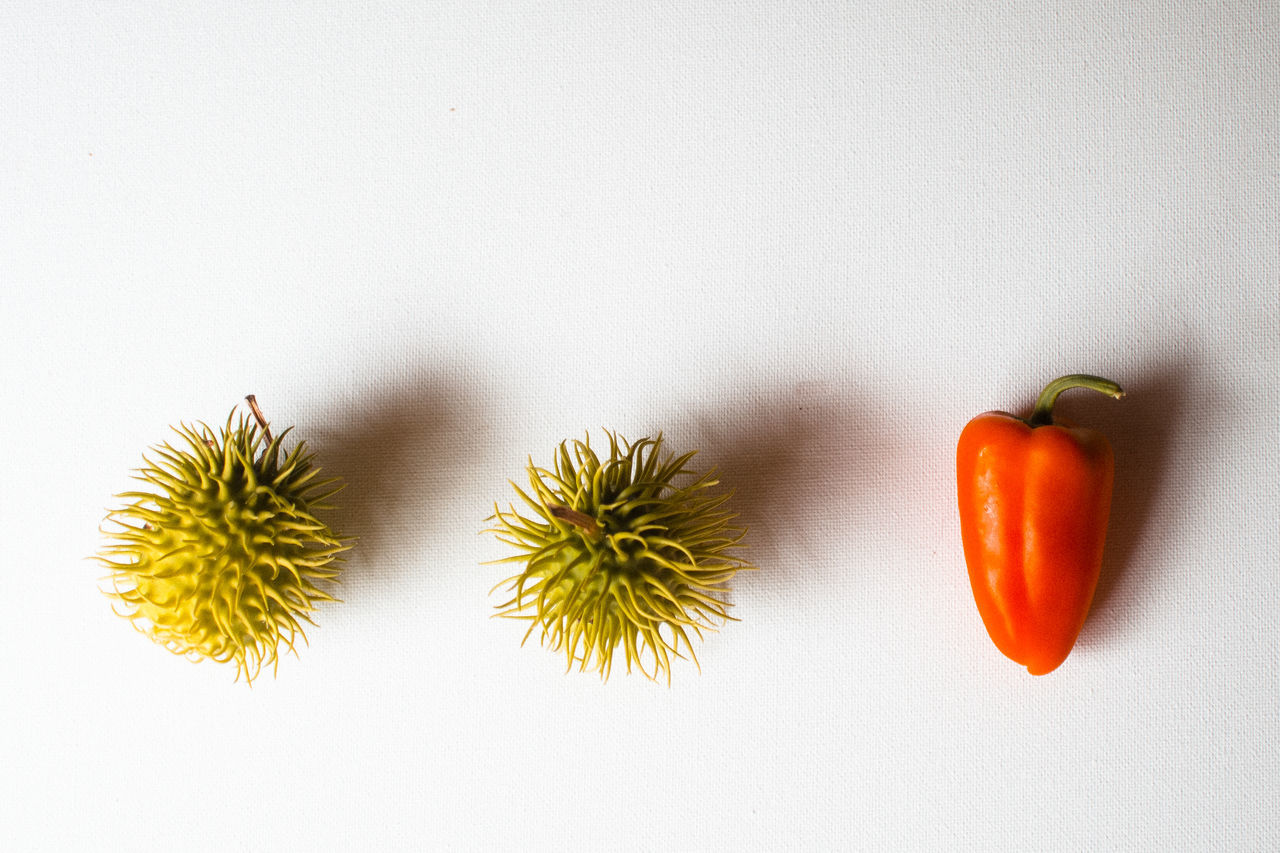 Beautiful stock photos of food, Bell Pepper, Chestnut - Food, Copy Space, Directly Above