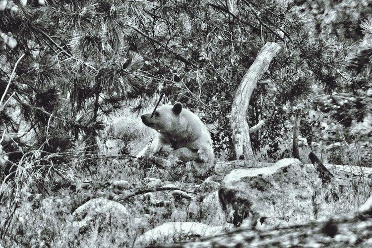 spirit bear Capture The Moment Spiritbear Animals Bear