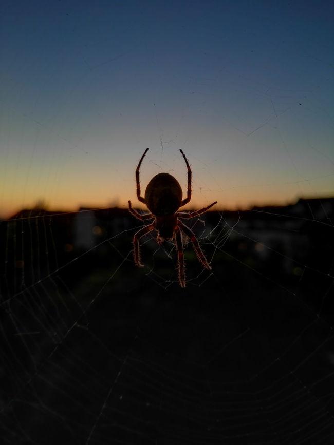 Gast am Fenster. Check This Out Spinne Spinnenenetz Leipzig