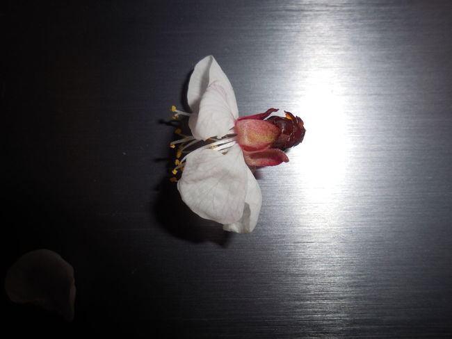Beautiful Flower Games Life After Death Light Shining White Flower With