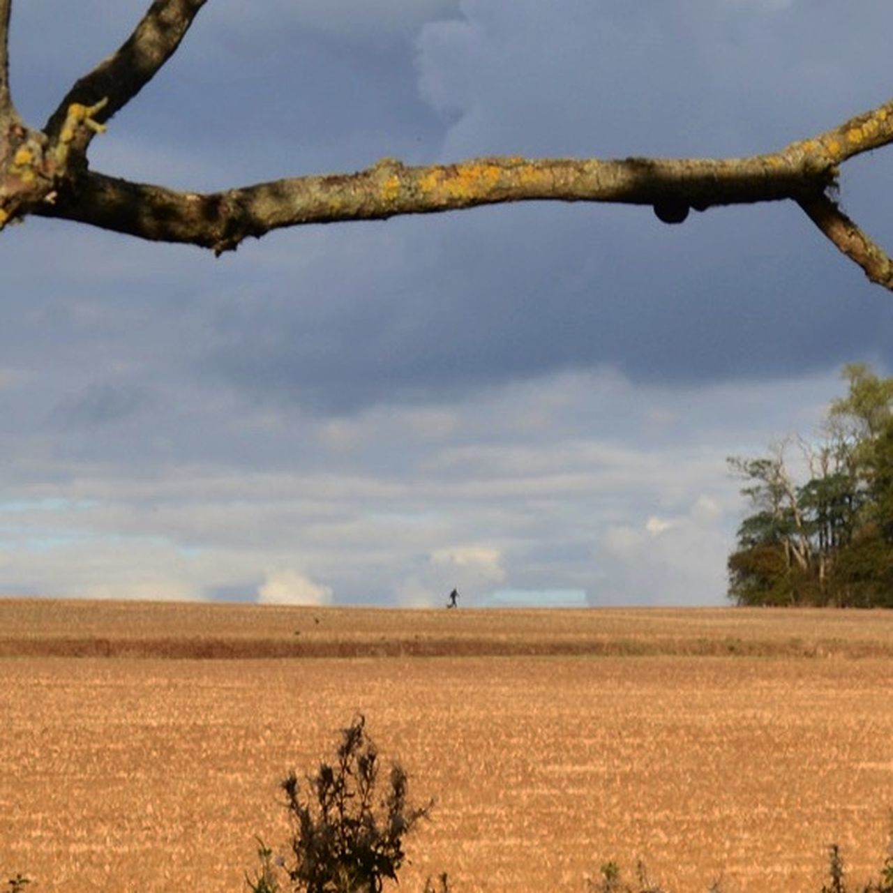 Dog Walker Sky Landscape Horizontal Sky And Trees Agriculture Outdoors Day Cloud - Sky Tree