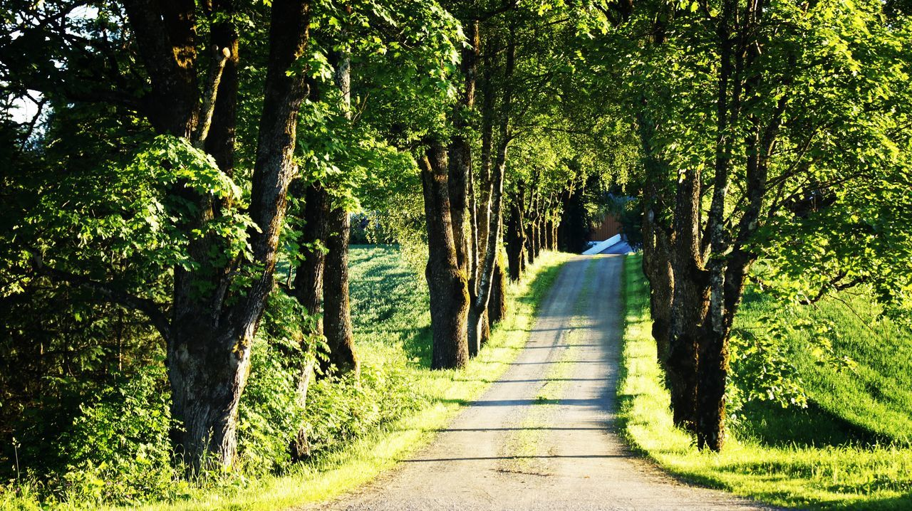 tree, nature, the way forward, tranquil scene, growth, beauty in nature, forest, tranquility, tree trunk, scenics, day, outdoors, branch, landscape, road, grass, no people