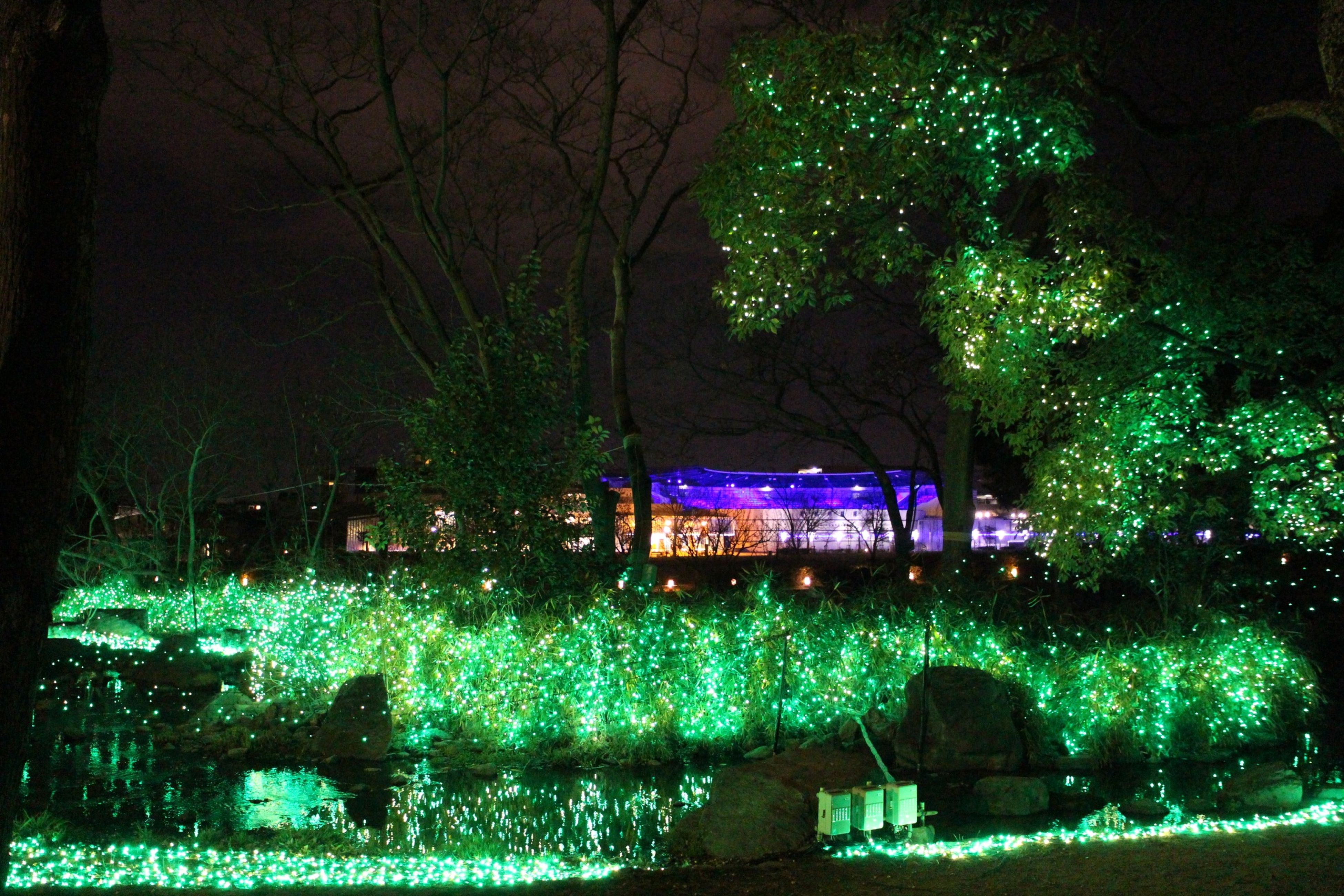 tree, illuminated, night, built structure, water, architecture, growth, building exterior, nature, house, branch, tranquility, lighting equipment, park - man made space, green color, reflection, outdoors, no people, tranquil scene, blue