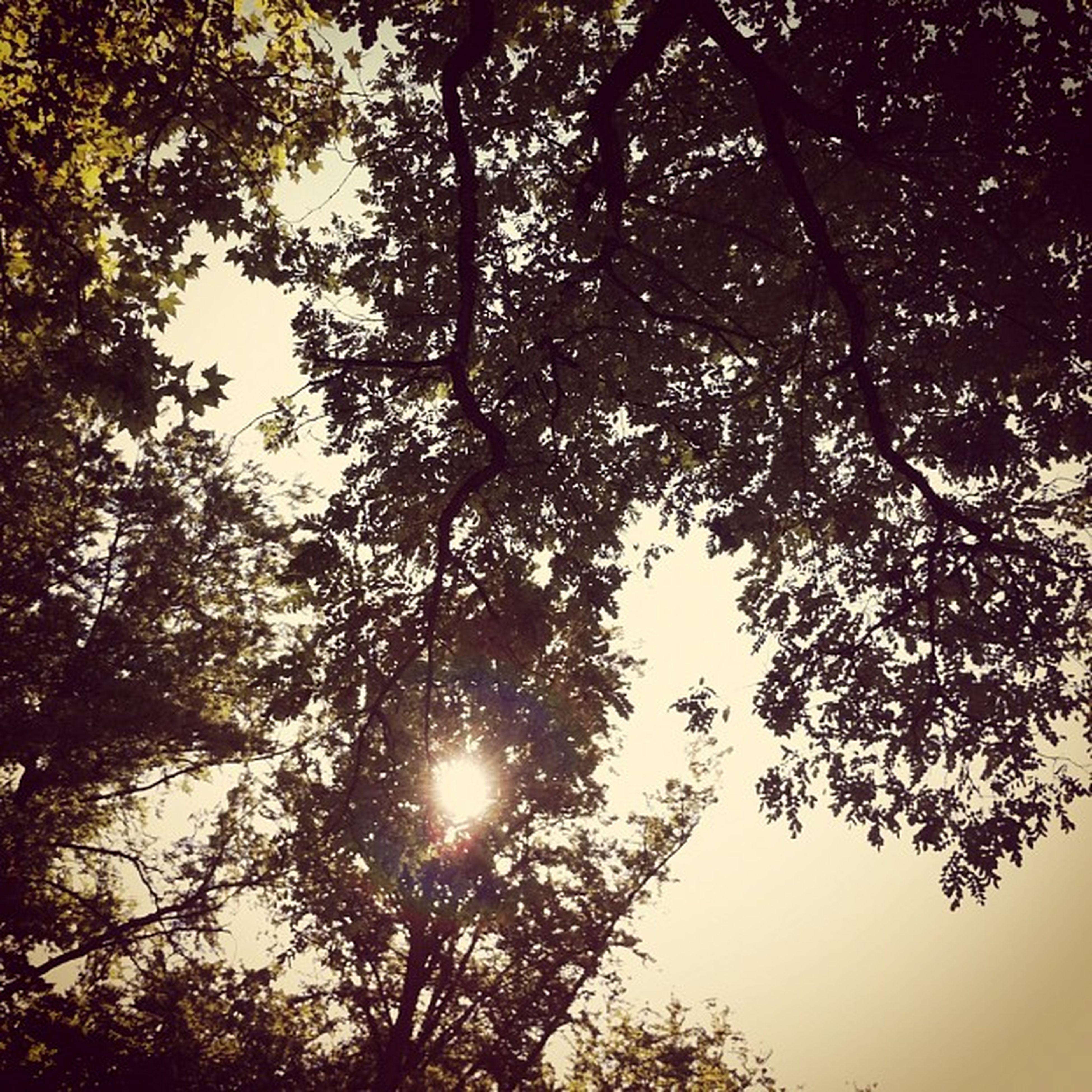 Looking up. #sky #sun #trees Sun Sky Trees