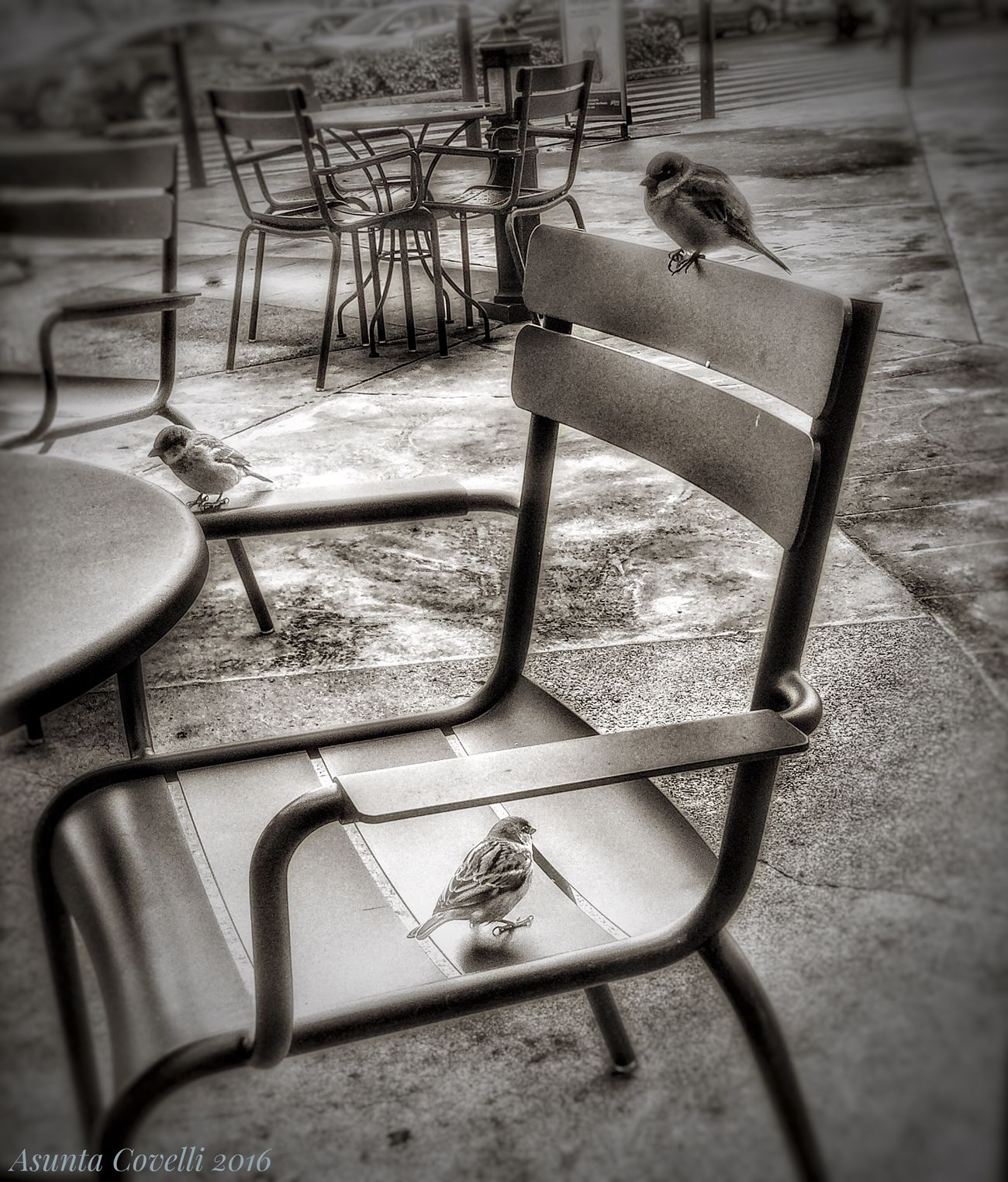 Empty Chair Outdoors Paving Stone Tranquility No People Tranquil Scene Birds_collection EyeEm Gallery Zoology Birds In The Wild Birds Of EyeEm  Birds Wildlife