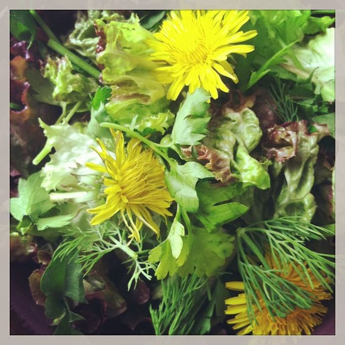 I love making a salad of fresh herbs-today's mix: Dill , Parsley , Dandelionleaf , Dandelionflowers and redlettuce. Will have a poppy seed dressing and some spiced herring on the side! You can use many edibles: Lemon balm, marjoram, oregano, violets, calendula, chamomile, basil, rosemary...yum!