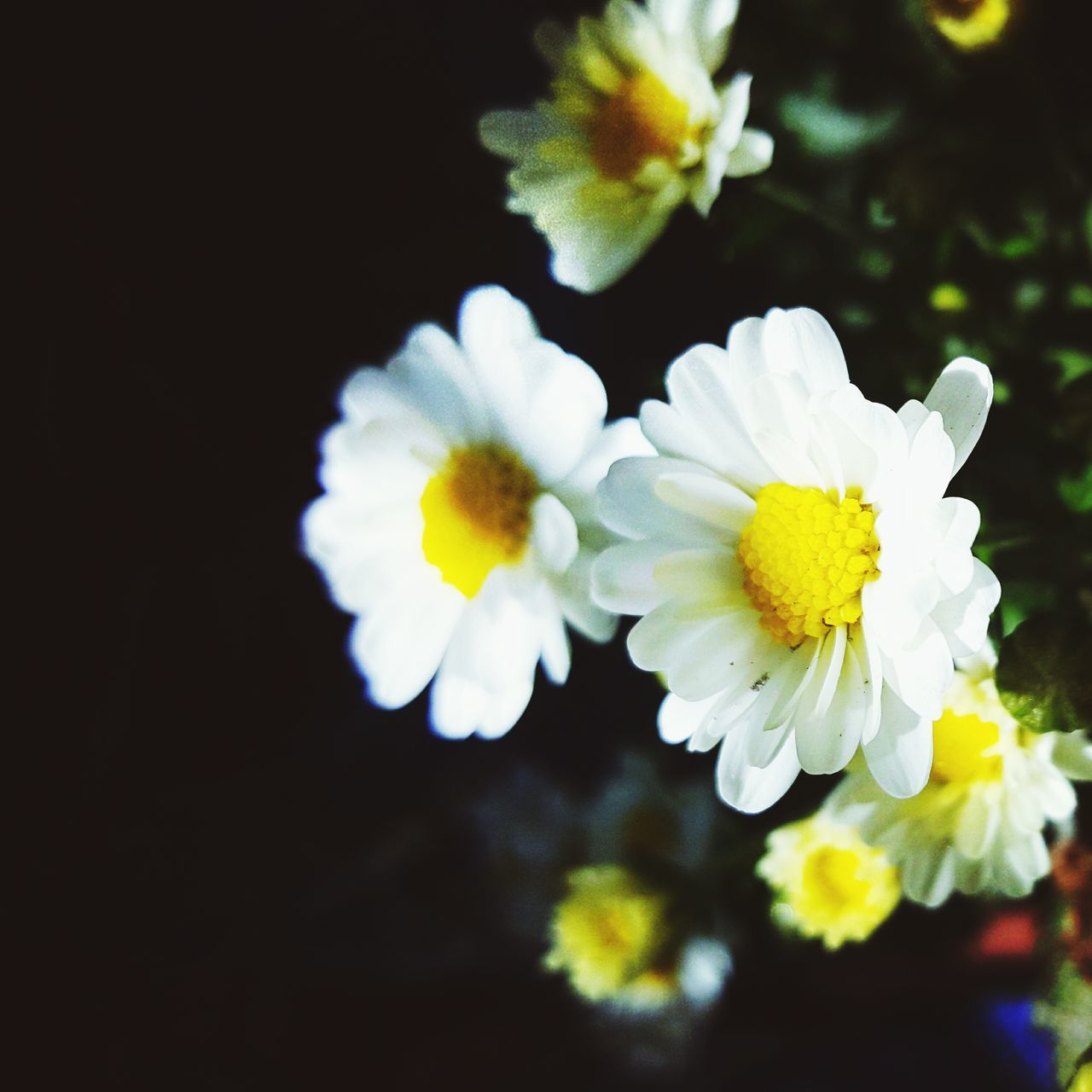 flower, yellow, petal, nature, beauty in nature, flower head, freshness, growth, fragility, blooming, plant, no people, close-up, outdoors, day