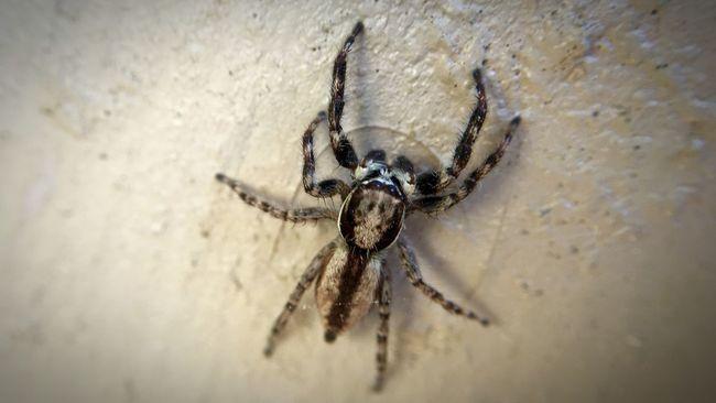 IPhoneography Eye4photography  Iphone6splus Olloclip Macro EyeEm Macro Spider