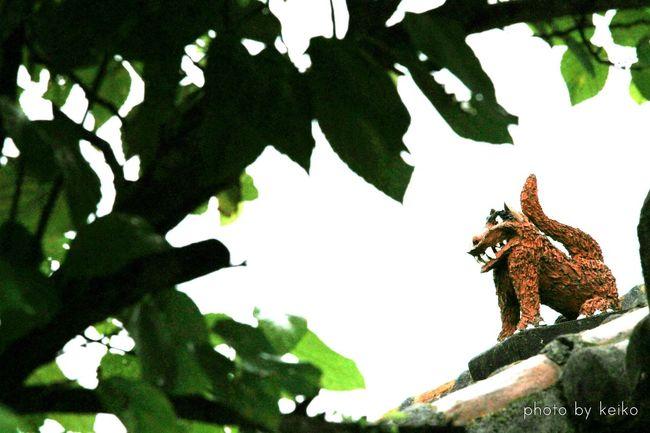 シーサー 竹富島 沖縄 八重山 OKINAWA, JAPAN Okinawa 風景 Relaxing Landscape_photography Landscape_Collection Nature_collection Japan Scenery Eye4photography  Japan Photography EyeEm Gallery Eyeemphotography 写真好きな人と繋がりたい EyeEm Best Shots Okinawa_kei