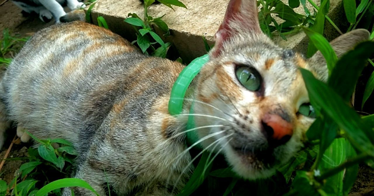 one animal, animal themes, domestic cat, mammal, feline, leaf, whisker, close-up, domestic animals, plant, day, pets, outdoors, no people, animals in the wild, portrait, nature