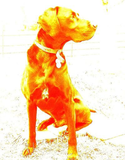 Lenny Messing Around Lenny Changing Things Colours Photo Editing Move The Cheese My Dog Different Perspective Enjoying Life Animal My Hero Companionship Bestfriend Edit Change Of Colors You Like? Sitting Still Drab Day Detail Alter The Original Animal Head  Outdoors Real Life. Tweaked Color Tweaking Around