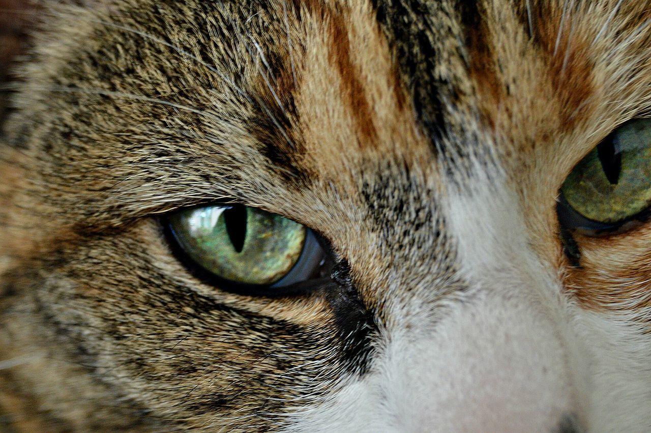 Beautiful stock photos of eyes, , Animal Body Part, Animal Eye, Animal Themes