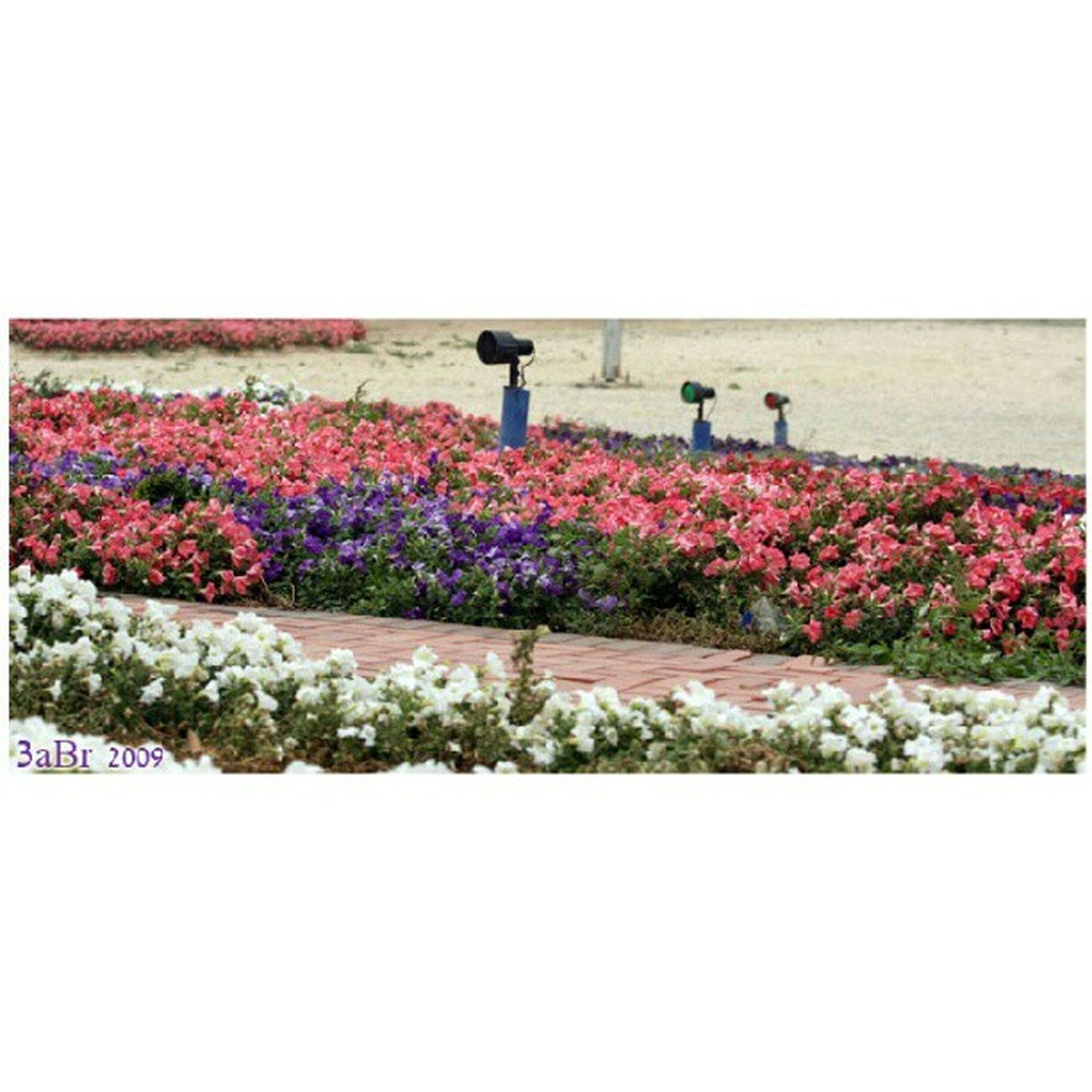 كرنيش الفناتير الجبيل الصناعية المملكة العربية السعودية كانون 50d Corniche Fanateer Jubail Saudi Arabia Canon 50D x3abrr