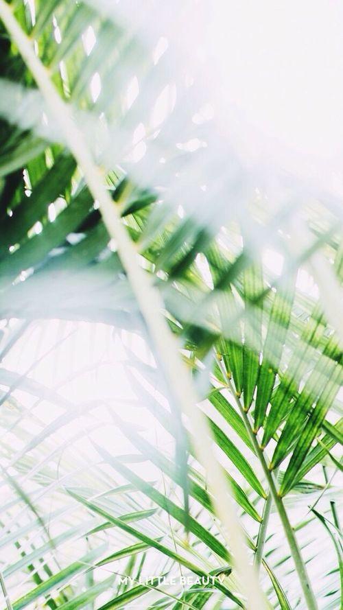 Palm tree MyLittleApp First Eyeem Photo
