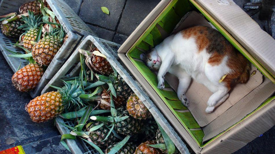 Beautiful stock photos of box, Animal Themes, Basket, Box, Cardboard