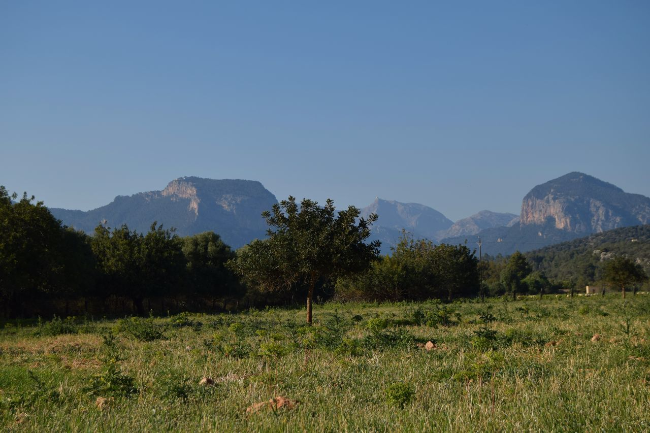 Alaro Beauty In Nature Clear Sky Day Field Grass Growth Landscape Mallorca (Spain) Mountain Mountain Range Nature No People Outdoors Scenics Sky Tranquil Scene Tranquility Tree EyeEm Diversity