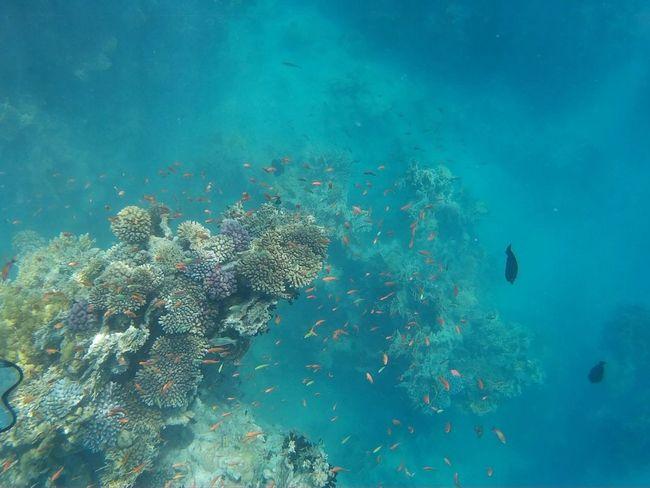 Sea Fish Sharmelsheikh Beautiful