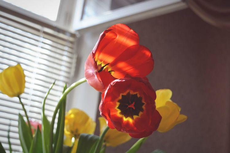 Taking Photos Hello World Hi! Flowers Tulips Spring Flowers Spring Тюльпаны цветы Природа
