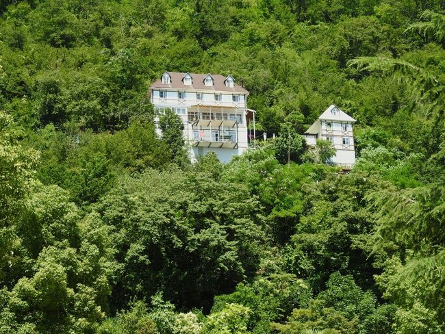 Green Paradise House In Mountains Greenyatmosphere Abkhazia Gagra Relaxing Enjoying Life Holidays ☀ Black Sea♥ Kavkaz