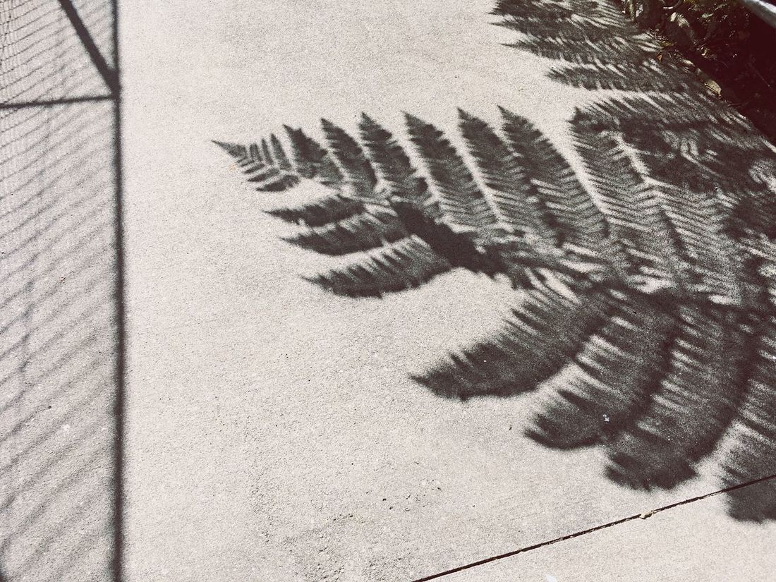 Diffused Light Fern Shadow High Angle View Animal Themes Day Outdoors No People