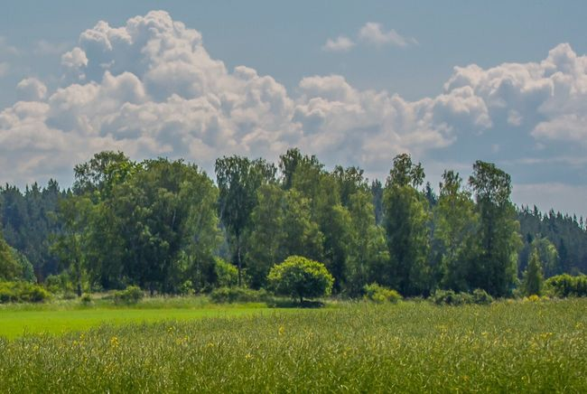 Landscape Grassfield Trees Nature
