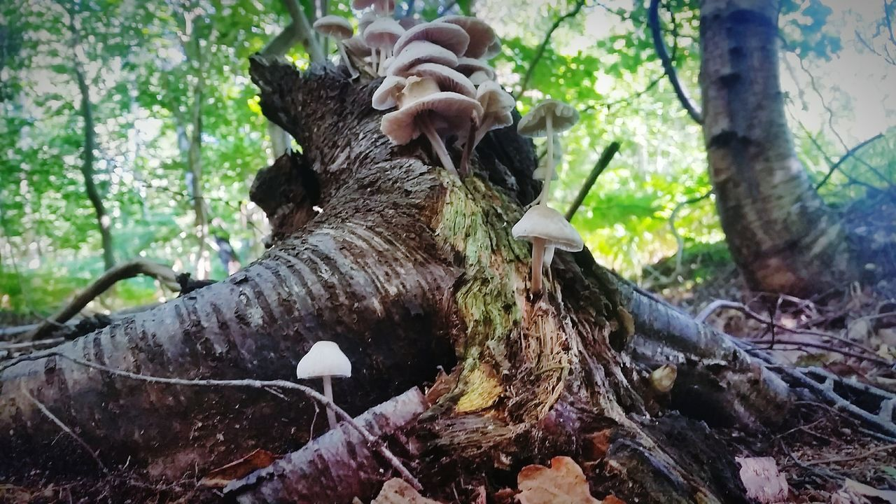 Dead Tree Giving Life Fungus Mushrooms Beauty In Nature See All Open Your Eyes Tree Of Life