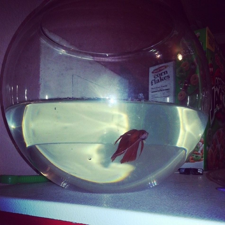 Pet NewAddition Blair Ishisname goldfish gulp